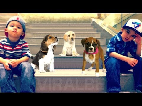 10 Most Liked Dog Breeds by Kids
