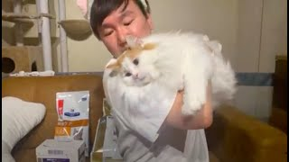 猫のご飯編にゃー