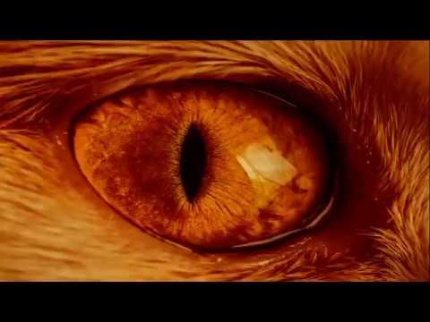 Nautilus Pompilius - Зверь/The Beast (english Subtitles)