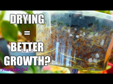 Orchid Q&A#43 - Better growth with drying out, roots not growing & more!