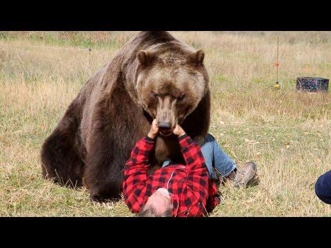 Медведь Загрыз Человека (Страшная Аудиозапись)