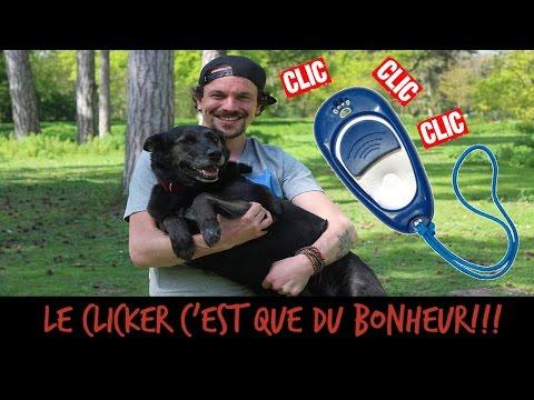 Comment dresser son chien avec un clicker ?