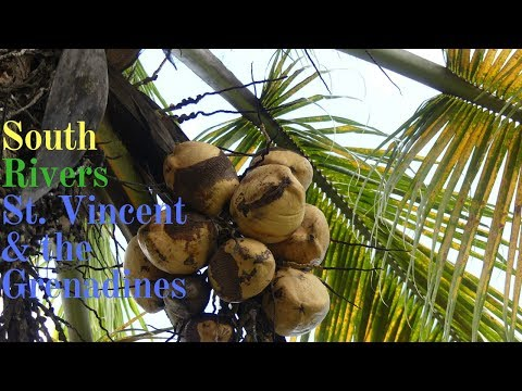 Sweet Home South Rivers| St. Vincent and the Grenadines
