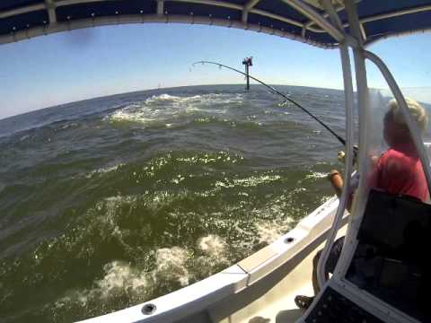 Fishing barnegat bay 3 youtube for Barnegat bay fishing report
