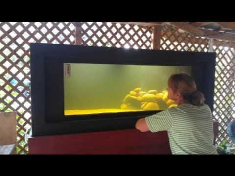 225 Galllon Plywood Fish Tank Build