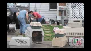 Uniontown house condemned after dozens animals found