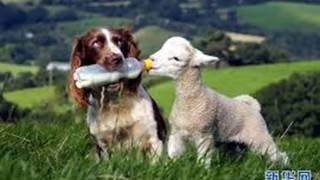 Приколы про животных#2 Приколи про тварин #2 Funny Animal #2