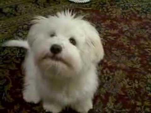 dog says hello