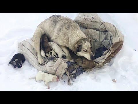 Вопрос: Чувствуют ли собаки во сне приближение опасности?