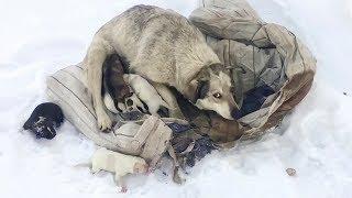 Собака родила десять щенят на снегу Они в опасности Пытаемся помочь saving puppies