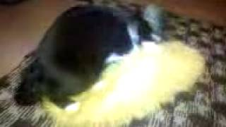 Кот жарит подушку
