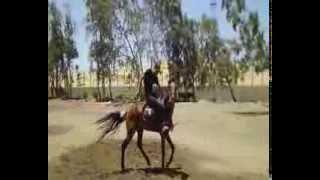Cavalo Maltido