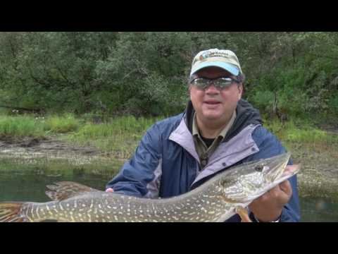 Wildside Adventures Travel Service - Alaskan Northern Pike