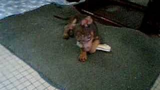 Kiki, The Minnie Jack
