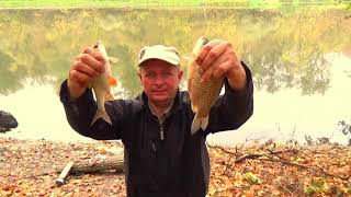 Рыбалка на реке золотой осенью поплавок болонка проводка плотва карась