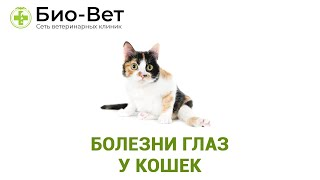 Болезни глаз у кошек. Ветеринарная клиника Био-Вет.
