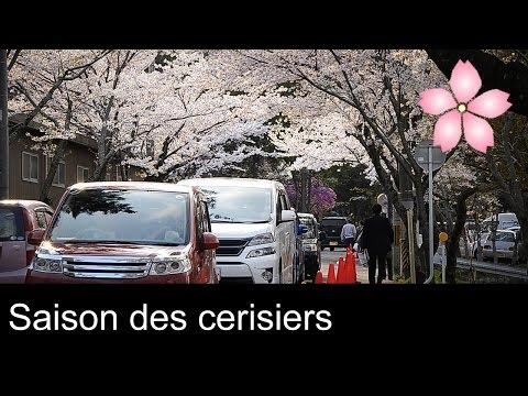 Le Japon - La saison des cerisiers / Cherry blossom - Trip to Japan  2014・さくら / 三重県 津市