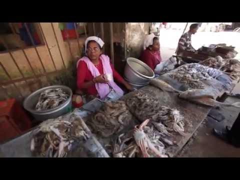 Kochi Travel Video