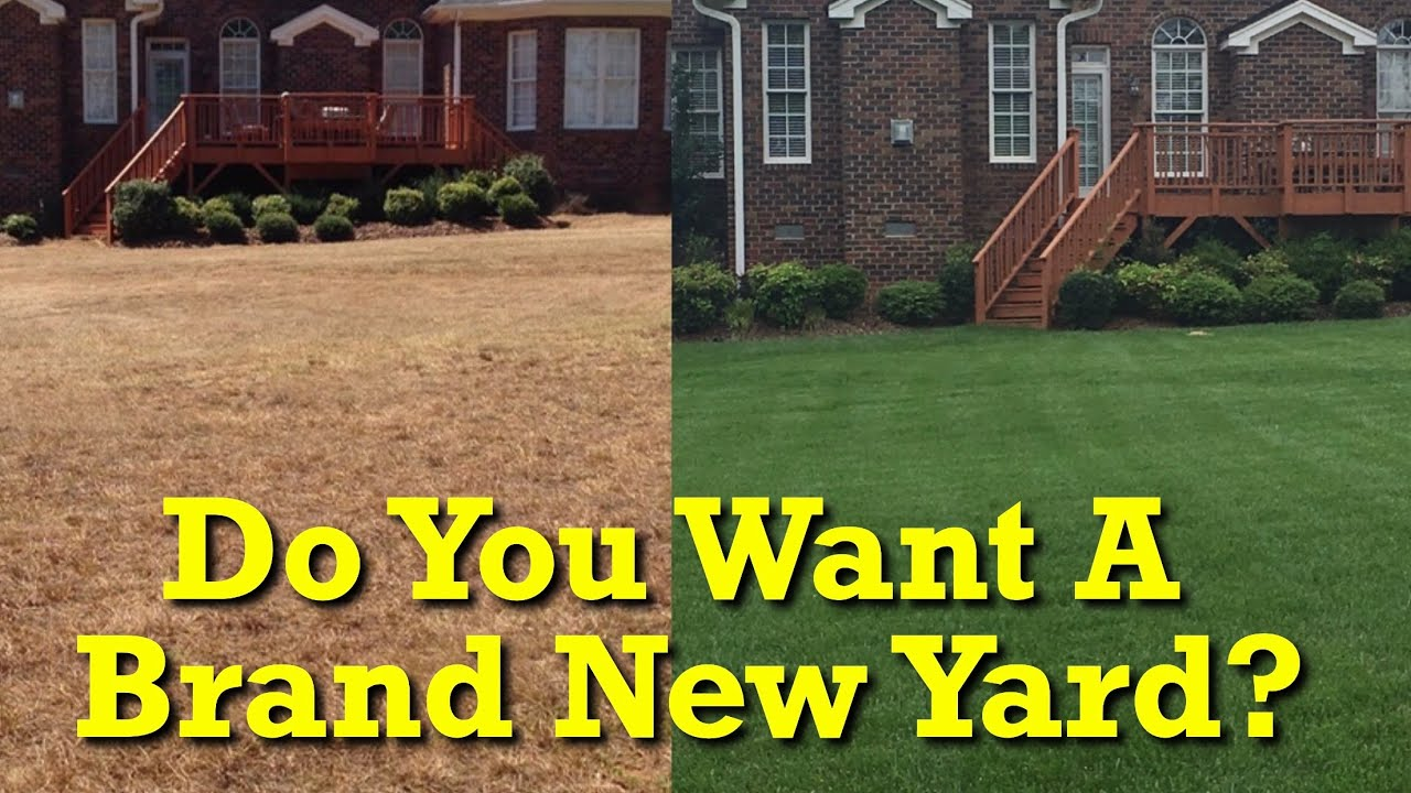 When Should I Kill My Yard And Start Over Lawn Renovation