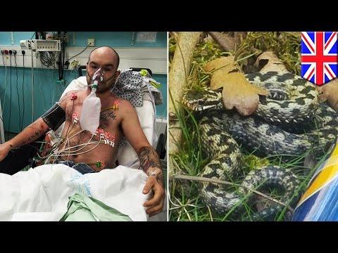 Ayah digigit ular berbisa raksasa yang ada di bawah kereta dorong anaknya - Tomonews