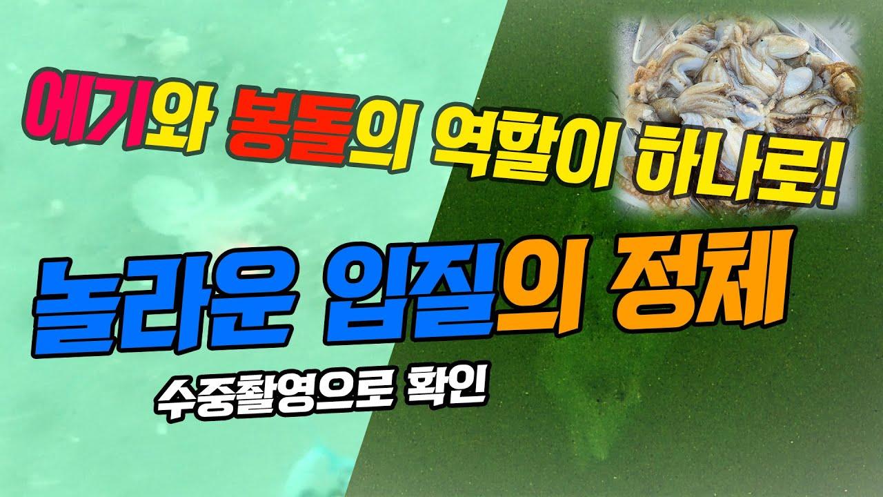쭈꾸미와 갑오징어의 공격 수중영상과 정말 간편하고 대박 낚시채비 공개합니다