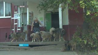 В Уфе слушается дело с участием скандально известной заводчицы собак
