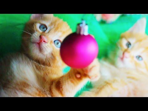 Чудесные котики в добрые руки!