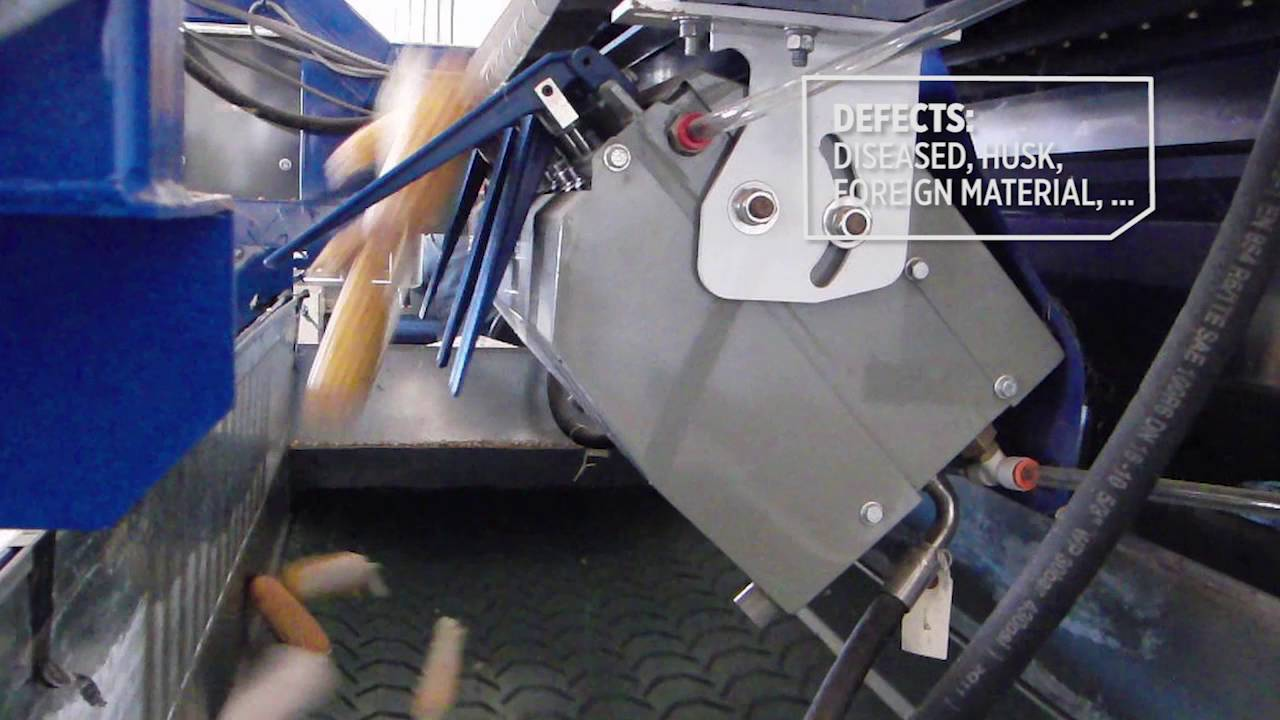 Corn cob sorting machine ZEA - TOMRA Sorting