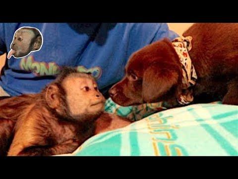 Monkey Meets A Puppy CUTE!
