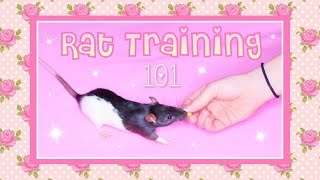Rat Training 101(Basic Tricks)