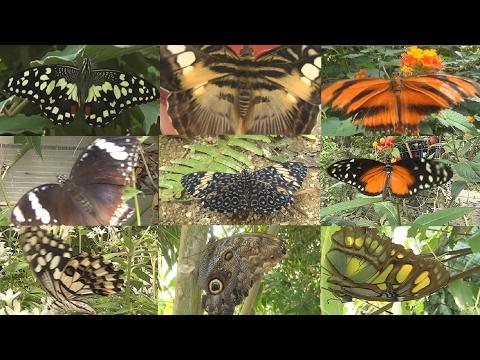 ¿en-qué-difieren-las-mariposas-nocturnas-de-las-diurnas?-naturaleza