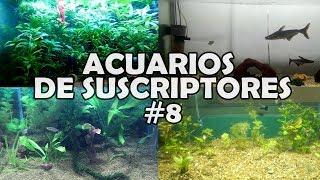ACUARIOS DE SUSCRIPTORES #8 | Plantados, Pez Pangasio, Alevienes | AcuariosLP