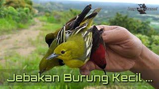 Download Lagu PETUALANGAN || MENJEBAK BURUNG KECIL DI BUKIT.. mp3
