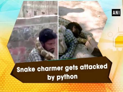 Snake charmer gets attacked by python - Uttar Pradesh News
