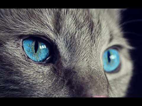 Funny Cat Series Collection 34