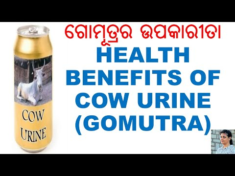 ଗୋମୂତ୍ରର ଉପକାରୀତା,ODIA,ODIA HEALTH TIPS,COW URINE,ODIA HEALTH BENEFITS ON COW URINE,VARKHA MOHAPATRA