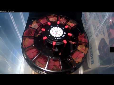 Fishmate F14 Automatic Feeder Timelapse Performance Review Flakes