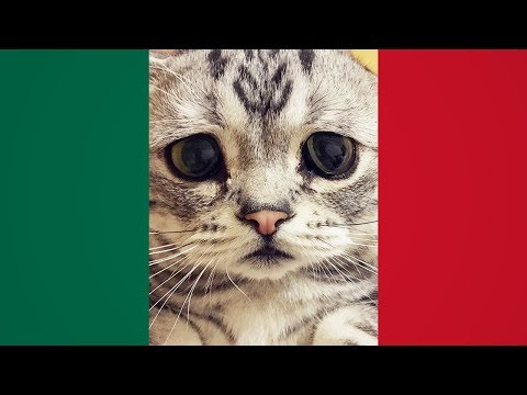 MEMES MEXICANOS 9