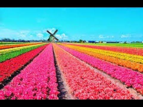 Цветочный Pай. Голландия,