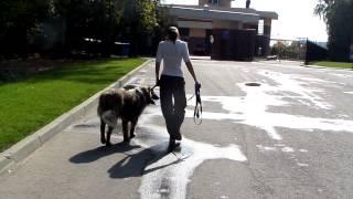 Дрессировка собак. Команда