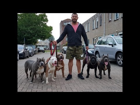 A very early morning walk with my bully pitbulls and thousands of collarparakeets.
