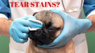 Dog Eye Care: Safety and Tear Staining Featuring Dr. Alex Schecter DVM