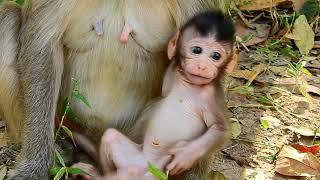 Very adorable newborn baby monkey, Really cute newborn baby monkey