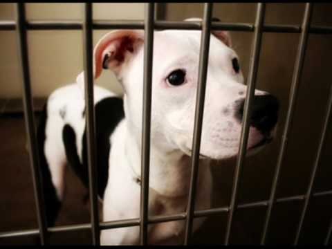 Friends Furever Animal Rescue Commercial