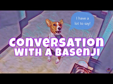Conversation with a basenji