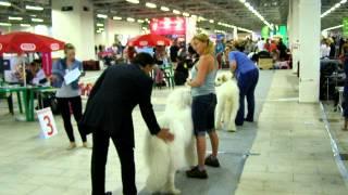 Белые ночи 2012, Пиренейская горная собака
