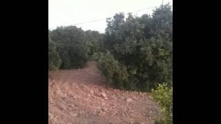 Nasar fruit farm