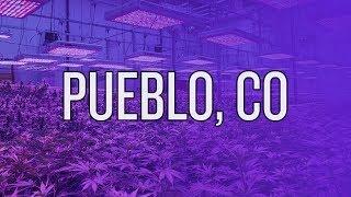 The Herbal Garden in Pueblo CO | HUGE Commercial LED Cannabis Grow
