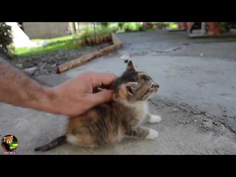 Charming 2 Cat Creative Interested Activities | #CamboAnimal