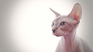 Кошачий рай или как прошла выставка кошек